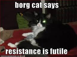 borgcat