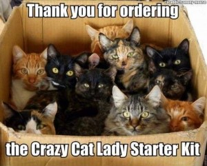 I love cats so much I'd rather see this at my door than the hot UPS guy